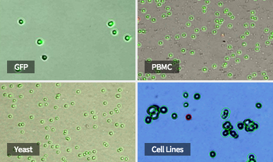 Automated CellCounters From PBMCs to bacteria