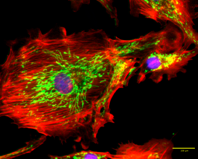 CELENA S Digital Imaging System BPAE cells image